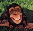 Agile Monkey